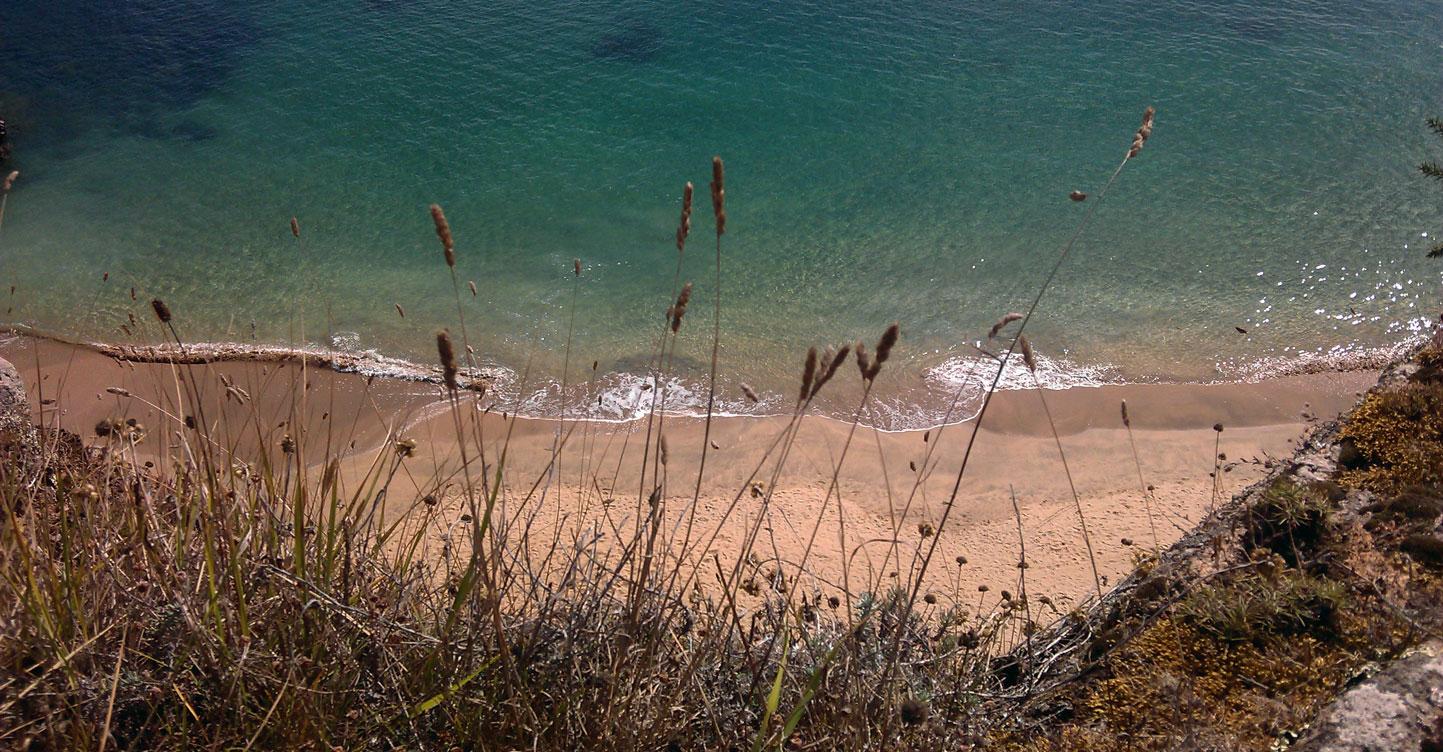 Découvertes islaises à l'horizon ! découvertes-islaises-à-horizon-blog-m-comme-mademoiselle-tisanes-ferme-emilie-ile-d-yeu