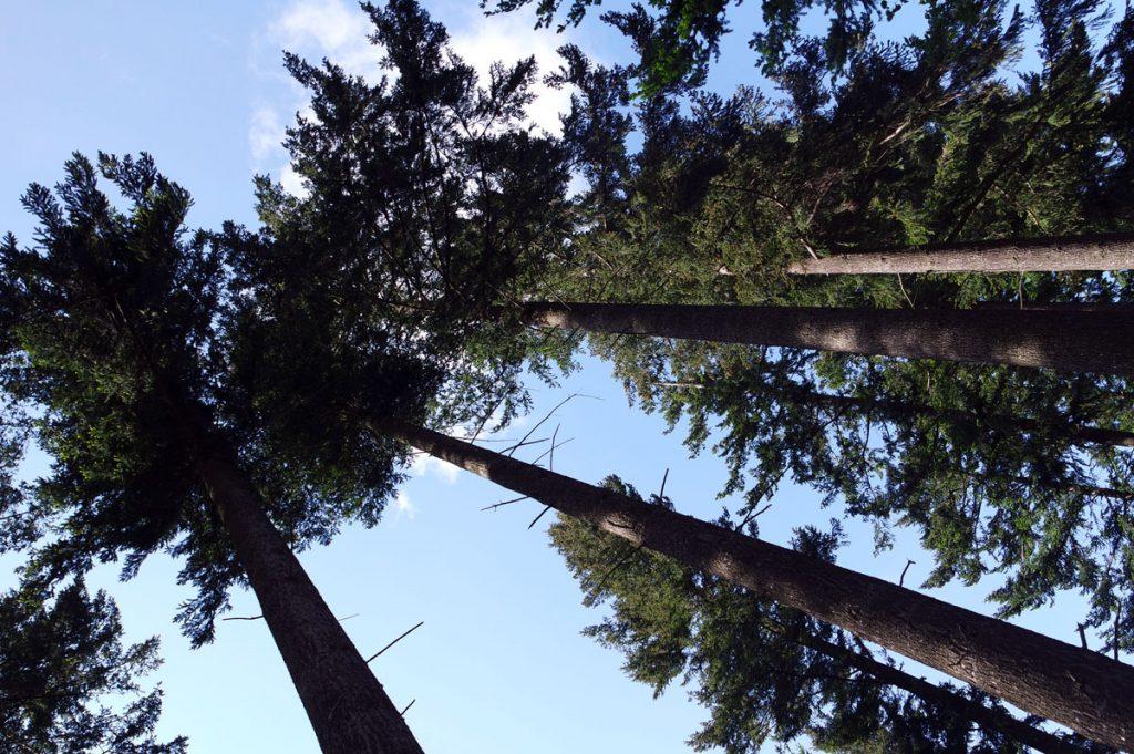 #3 Séjour en Auvergne : puy de Dôme, arboretum de Royat & ferme Randanne sejour-en-auvergne-puy-de-dome-arboretum-de-royat-ferme-randanne-campagne-auvergnate-blog-mcommemlle-1
