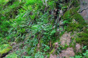 #3 Séjour en Auvergne : puy de Dôme, arboretum de Royat & ferme Randanne sejour-en-auvergne-puy-de-dome-arboretum-de-royat-ferme-randanne-campagne-auvergnate-blog-mcommemlle-12