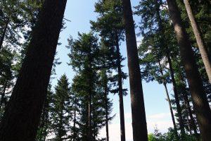 #3 Séjour en Auvergne : puy de Dôme, arboretum de Royat & ferme Randanne sejour-en-auvergne-puy-de-dome-arboretum-de-royat-ferme-randanne-campagne-auvergnate-blog-mcommemlle-2