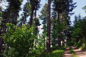 #3 Séjour en Auvergne : puy de Dôme, arboretum de Royat & ferme Randanne sejour-en-auvergne-puy-de-dome-arboretum-de-royat-ferme-randanne-campagne-auvergnate-blog-mcommemlle-3
