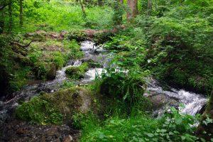 #3 Séjour en Auvergne : puy de Dôme, arboretum de Royat & ferme Randanne sejour-en-auvergne-puy-de-dome-arboretum-de-royat-ferme-randanne-campagne-auvergnate-blog-mcommemlle-5