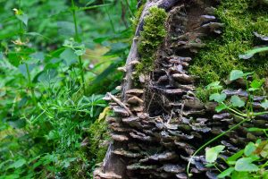#3 Séjour en Auvergne : puy de Dôme, arboretum de Royat & ferme Randanne sejour-en-auvergne-puy-de-dome-arboretum-de-royat-ferme-randanne-campagne-auvergnate-blog-mcommemlle-6