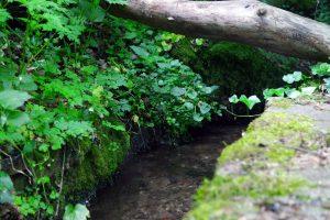 #3 Séjour en Auvergne : puy de Dôme, arboretum de Royat & ferme Randanne sejour-en-auvergne-puy-de-dome-arboretum-de-royat-ferme-randanne-campagne-auvergnate-blog-mcommemlle-8