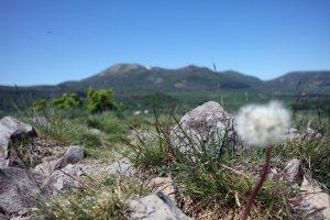 #2 Séjour en Auvergne : Puy de Sancy & lac Pavin sejour-en-auvergne-puy-de-sancy-monts-dore-lac-pavin-campagne-auvergnate-blog-mcommemlle-8