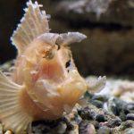 Visite du Grand Aquarium de Saint-Malo sortie-visite-grand-aquarium-saint-malo-bretagne-ille-et-vilaineblog-mcommemlle-1