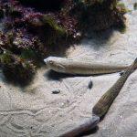 Visite du Grand Aquarium de Saint-Malo sortie-visite-grand-aquarium-saint-malo-bretagne-ille-et-vilaineblog-mcommemlle-3