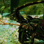 Visite du Grand Aquarium de Saint-Malo sortie-visite-grand-aquarium-saint-malo-bretagne-ille-et-vilaineblog-mcommemlle-4