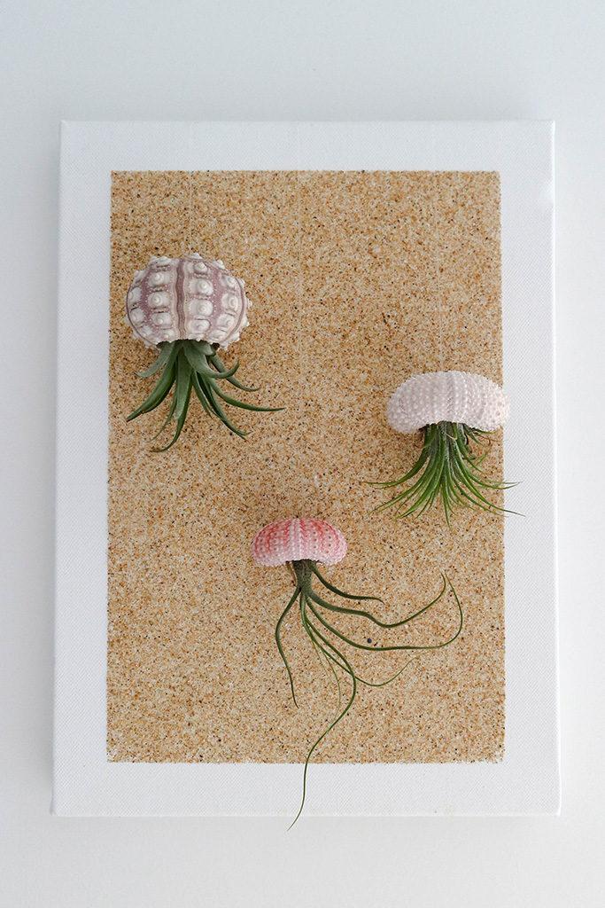 Métamorphoser des tillandsias en méduses des airs !