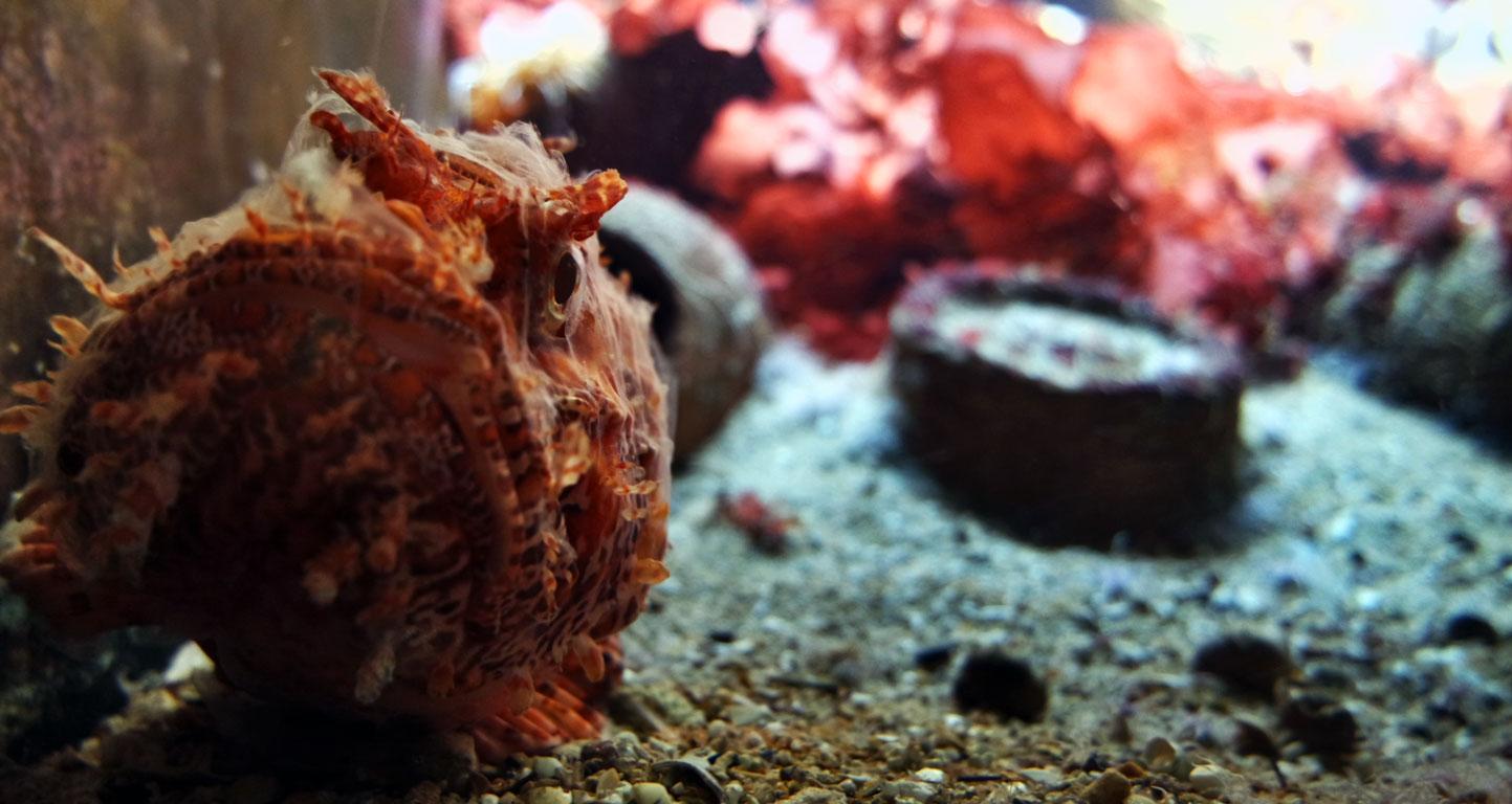 Visite du Grand Aquarium de Saint-Malo sortie-visite-grand-aquarium-saint-malo-bretagne-ille-et-vilaineblog-mcommemademoiselle